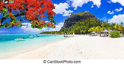 słoneczny, island., plaże, spędza urlop, mauritius, piękny, tropikalny