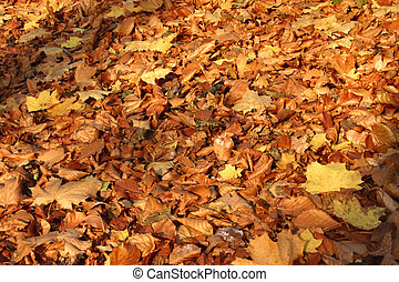 s, feuilles, automne