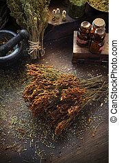 s., hierbas, wort, secado, medicina, cuisine., john's