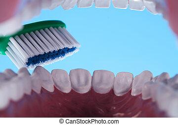saúde dental, objetos, dentes, cuidado