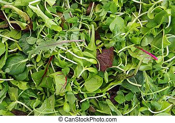 sałata, mesclun, ziele, pole, mieszany