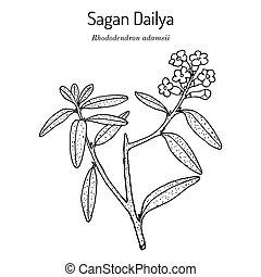 Saagan Dailya Rhododendron adamsii , medicinal plant. Hand drawn vector illustration