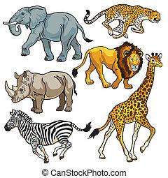 sabana, conjunto, animales, africano