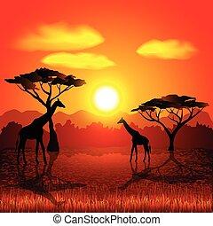 sabana, vector, ocaso, plano de fondo, africano