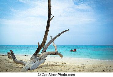 sabbia, albero morto, spiaggia