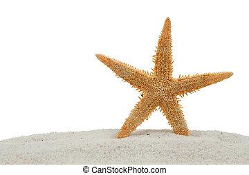 sabbia, bianco, starfish, isolato