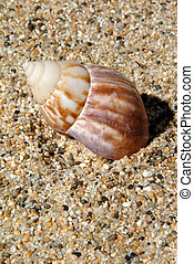 sabbia, conchiglia, mare