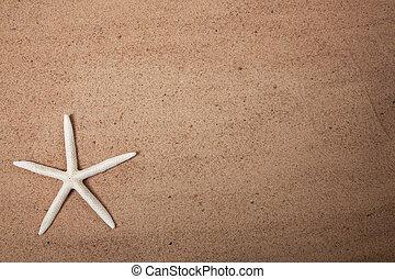 sabbia, fondo, con, uno, starfish