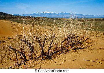 sabbia, kazakhstan., deserto, parco, altyn-emel, nazionale, dune