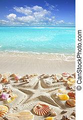 sabbia spiaggia, starfish, stampa, caraibico, tropicale,...