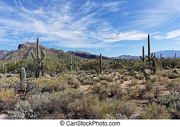 Desert in Tucson