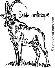 Sable antelope - vector illustration sketch hand drawn with black lines, isolated on white background