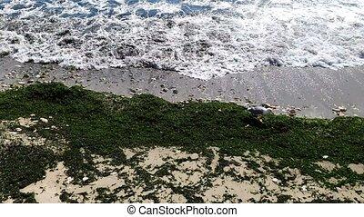 sable, concept, vide, après, covid, plage., vue, tourisme