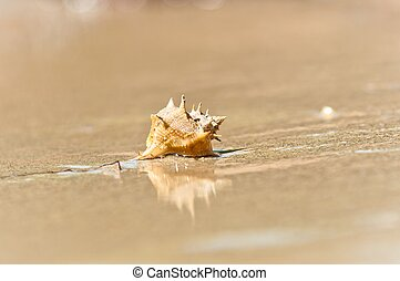 sable, coquille, closeup, mer, mouillé