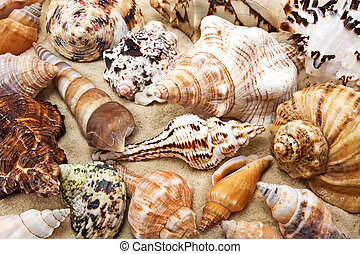 sable, coquille, mer, fond