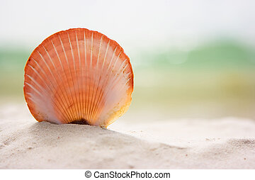 sable, coquille