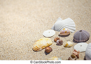 sable, coquilles