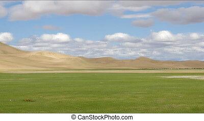 sables, mongol, troupeau, animaux, els