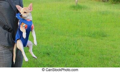 sac bandoulière, chiot, chien