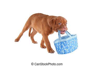 sac, porter, chien