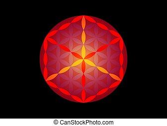 sacré, géométrie, fleur, religion, spirituality., vecteur, cube., isolé, symbole, fond, vie, alchimie, noir, metatrons