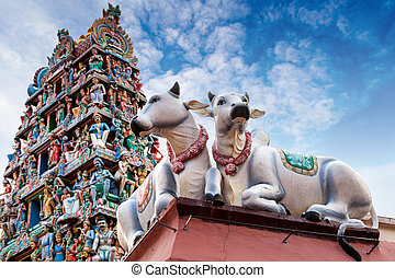 Sacred Cows Guarding an Indian Temple - Focus on a pair of...