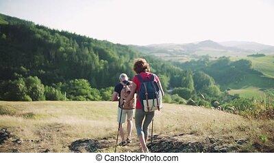 sacs dos, nature., vue, arrière, touriste, couples aînés, randonnée