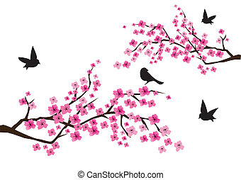 sacura branches - vector cherry blossom with black birds