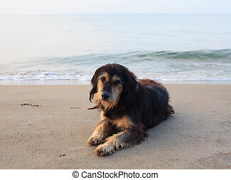 sad and poor dog lying on sea beach with sorrow face