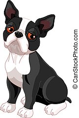 Illustration of sad cute Boston Terrier