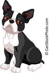 Sad Boston Terrier - Illustration of sad cute Boston Terrier...