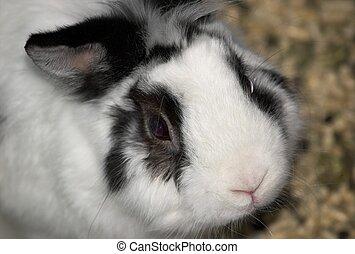 Sad bunny - A close-up of a rabbit looking up morosely at...