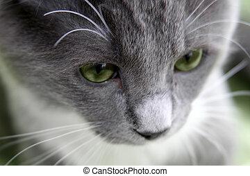 Sad cat with green eyes