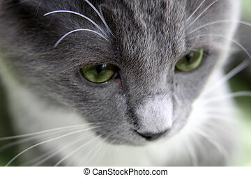 Sad cat with green eyes