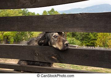Sad dog behind the fence