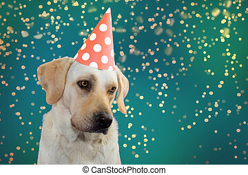 SAD DOG BIRTHDAY, MARDI GRAS OR NEW YEAR. LABRADOR WEARING A SALMON COLORED POLKA DOT HAT PARTY. ISOLATED SHOT AGAINST GREEN PASTEL BACKGROUNDS. DEFOCUSED GOLDEN CONFETTI FALLING.