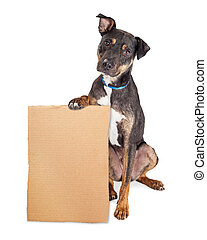 Sad Dog Holding Blank Cardboard Sign