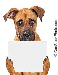 Sad Dog Holding Blank Sign