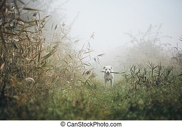 Sad dog in autumn fog