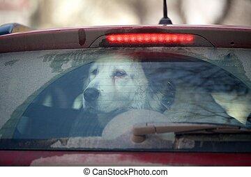sad dog in the car
