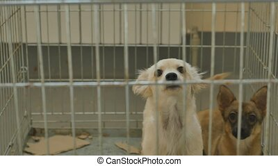 Sad dog locked in cage.