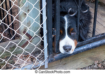 Sad dog poking his head through the fence