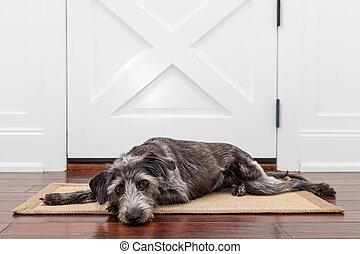 Sad Dog Waiting For Owner - A dog laying down on a mat in...