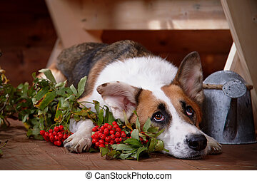 Sad dog with a mountain ash in the rural house.