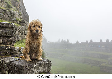 Sad doggy in Machu Picchu