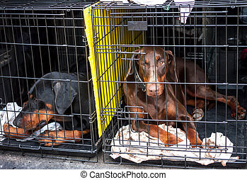 sad dogs in cages waiting for the owner