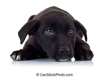 sad eyes of a black little stray puppy dog looking up at something