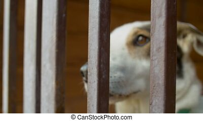 Sad face of a clever dog in a cage - Close up nose of a good...