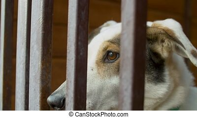 Sad face of a clever dog in a cage - Close up sad face of a ...