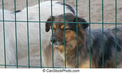 Sad homeless lonely dog partial heterochromia unwanted and barking in animal shelter and wag their tail happily. Asylum. Stray dogs in iron cage. Poor and hungry street dogs.